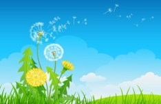 Vector Spring Taraxacum Dandelion Background 01