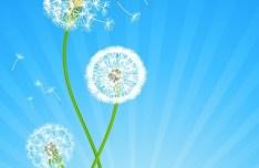 Vector Spring Taraxacum Dandelion Background 02