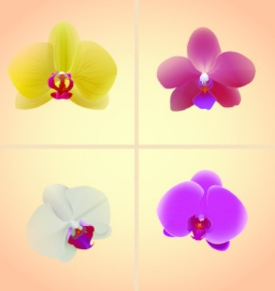 Vintage Orchid Card Background Vector 02