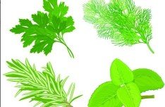 Collection Of Green Herbals Vector 04