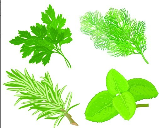 Collection Of Green Herbals Vector 04