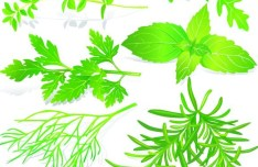Collection Of Green Herbals Vector 05