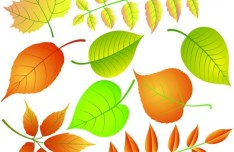 Vector Illustrations Of Colored Leaves