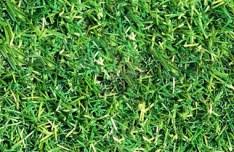 Seamless Green Grass Texture