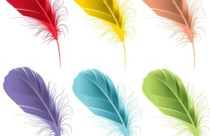 6 Colored Feathers Vector