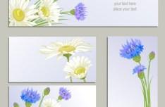 Set Of Vector Wild Chrysanthemum Flower Banners