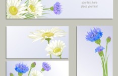 Set Of Vector Wild Chrysanthemum Flower Banners