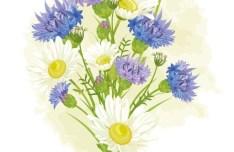 Vintage Wild Chrysanthemum Flower Illustration Vector