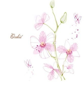 Hand Drawn Pink Orchid Vector Illustration