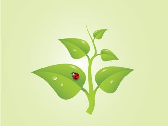 Green Tree Brunch Vector illustration