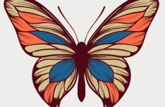 Colorful Butterfly Vector Art