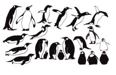 Penguin Silhouette Set Vector