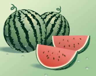 Summer Fresh Watermelon Vector
