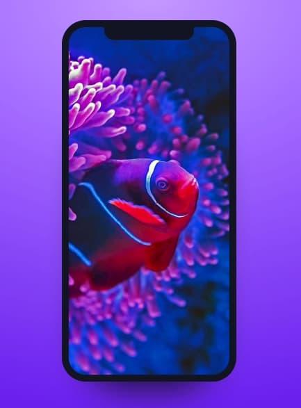 Cool iPhone X & XS Mockup (PSD+XD)