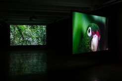 Allora & Calzadilla, The Great Silence, 2014. 3-channel HD video installation. 16:22 minutes. Courtesy of the artists. In collaboration with The Fabric Workshop and Museum, Philadelphia. Photo credit: Carlos Avendaño.