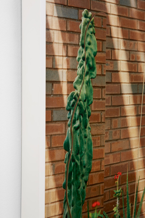 danges_cactus_detail