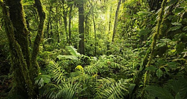 terra più verde