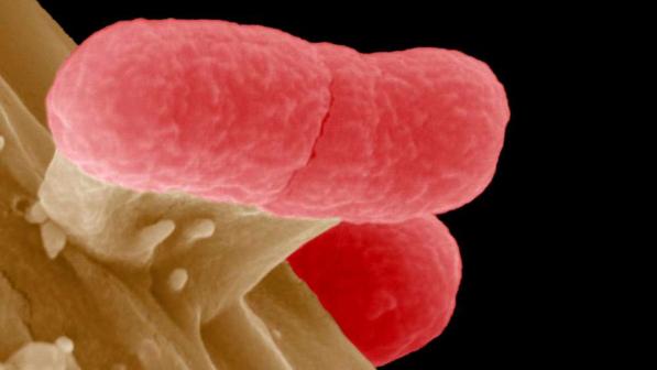 batterio, antibiotici