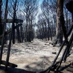 vesuvio-incendi
