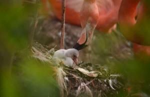 fenicotteri-rosa-zoo