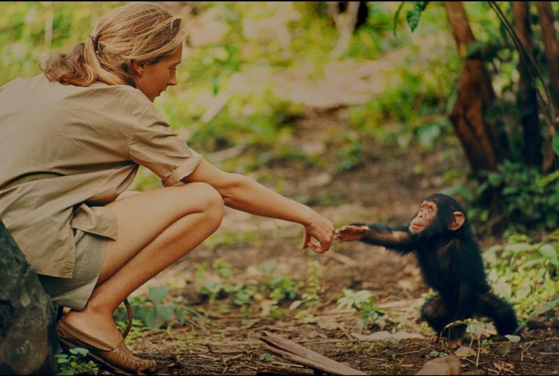 Jane, l'esclusivo documentario sulla donna che amava scimpanzé