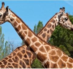 Matilde e la giraffa Parco Natura Viva