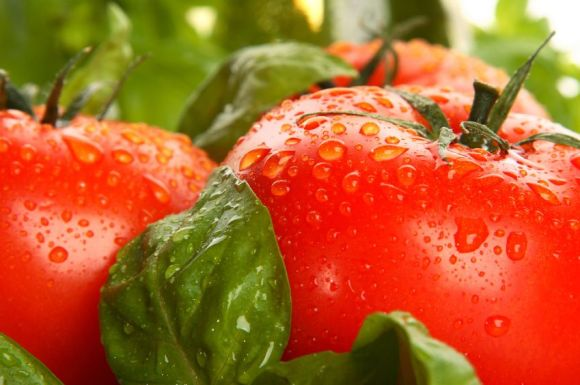 photo tomate