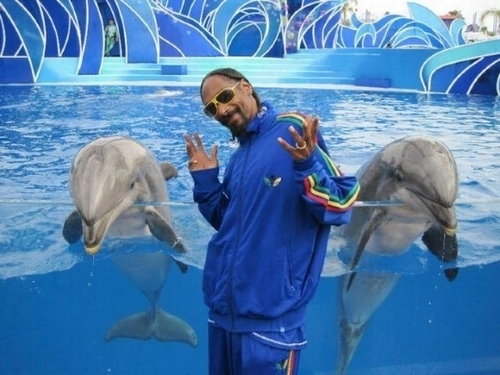 Snoop dogg niaisant devant des dauphins