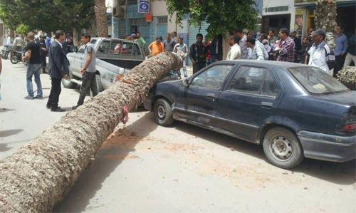 Deux voitures écrasées par des palmiers, à la Place Farhat Hached à Gabès