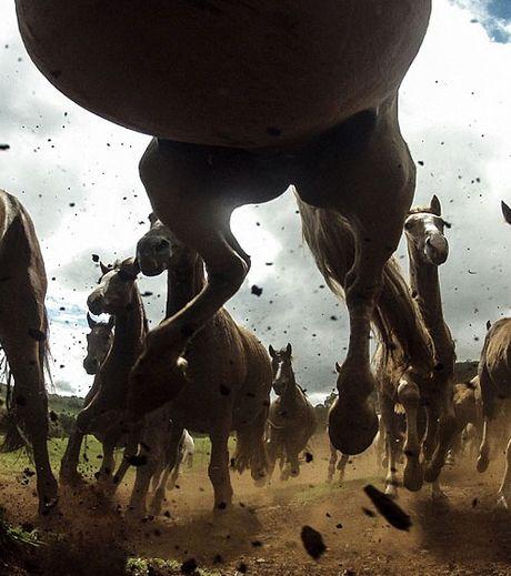 une-prise-de-vue-surprenante-de-chevaux-criollo-natifs-de-l-amerique-du-sud_127559_w460