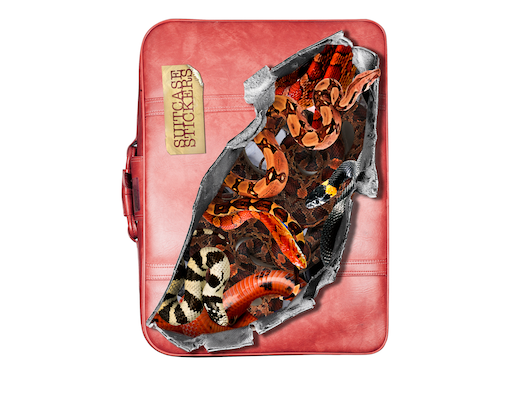 valise-snake
