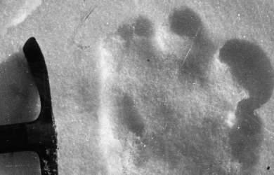 Une photographie de 1951 prise par Eric Shipton d'une empreinte yeti présumé