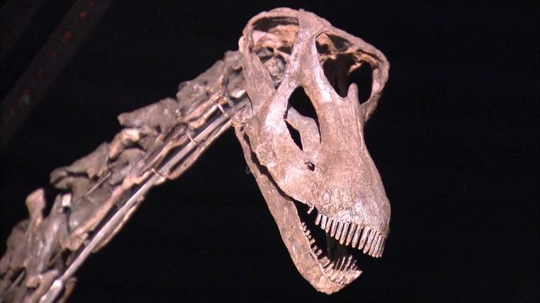 Le squelette a pris beaucoup de l'espace dans la maison de vente aux enchères West Sussex