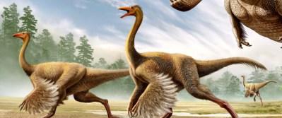 Découverte de cet espéce de dinosaures qui resemblent à un poulet