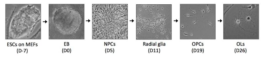 Cell Identity Establishment and Maintenance