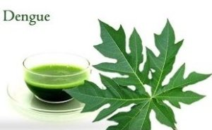 pappaya leaf extract for dengue fever