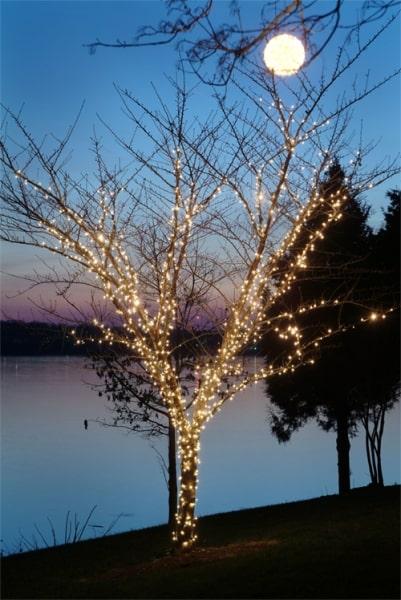 Holiday Lighting 14
