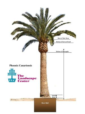Palm Trees | Relocation & Preservation