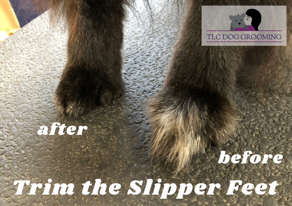 Trimming the Slipper Feet - Prevent Snow and Ice Balls in Your Dogs Feet TLC Dog Grooming
