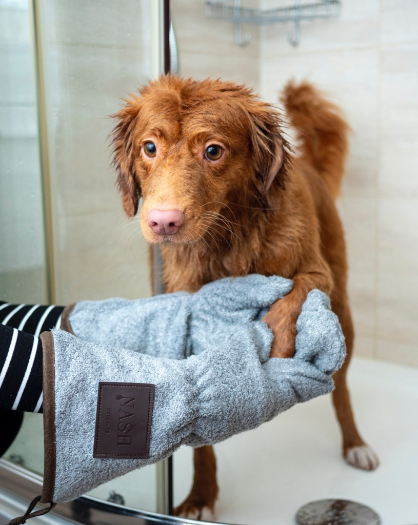 Photo of Dog Getting Out of the Shower
