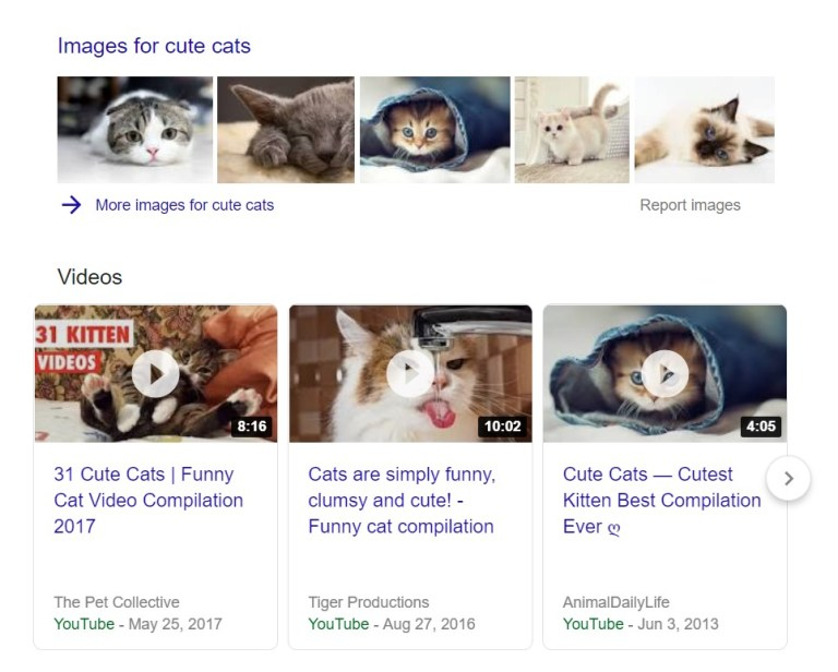 universal search results for cute cats