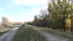 Drum asfaltat de Primăria Carcaliu. FOTO TLnews.ro