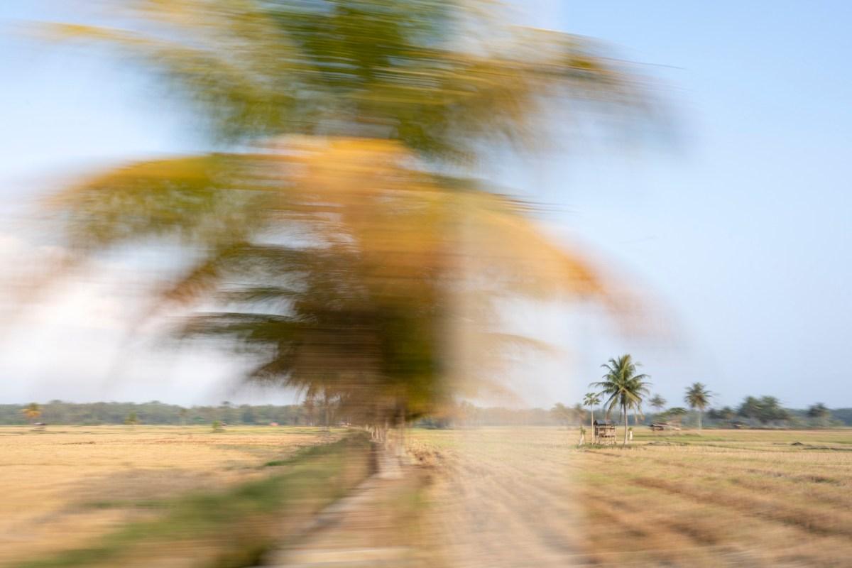 Surf Photographer, Photo Prints Sumatra, Rice field print