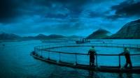 #Marine #Ocean #Water copyright @VisitFaroeIslands