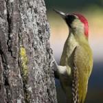 https://pixabay.com/photos/bird-woodpecker-plumage-colors-5002772/