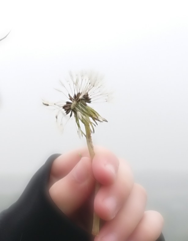 We told the time by blowing dandelion seeds