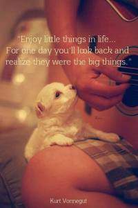 """Enjoy little things in life... For one day you'll look back and realize"