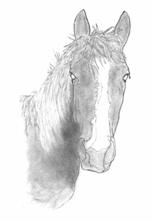 Draw a horse part one outline drawing and first shading how to draw a horse part one pic two ccuart Images