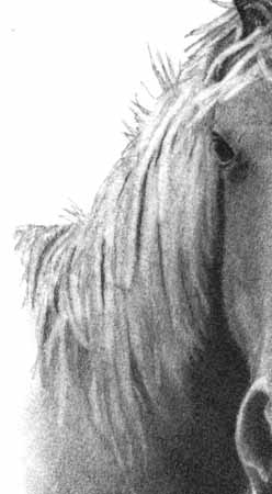 How to Draw a Horse - Part Two - Pic Seven