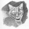 Cat Sketch Step Three